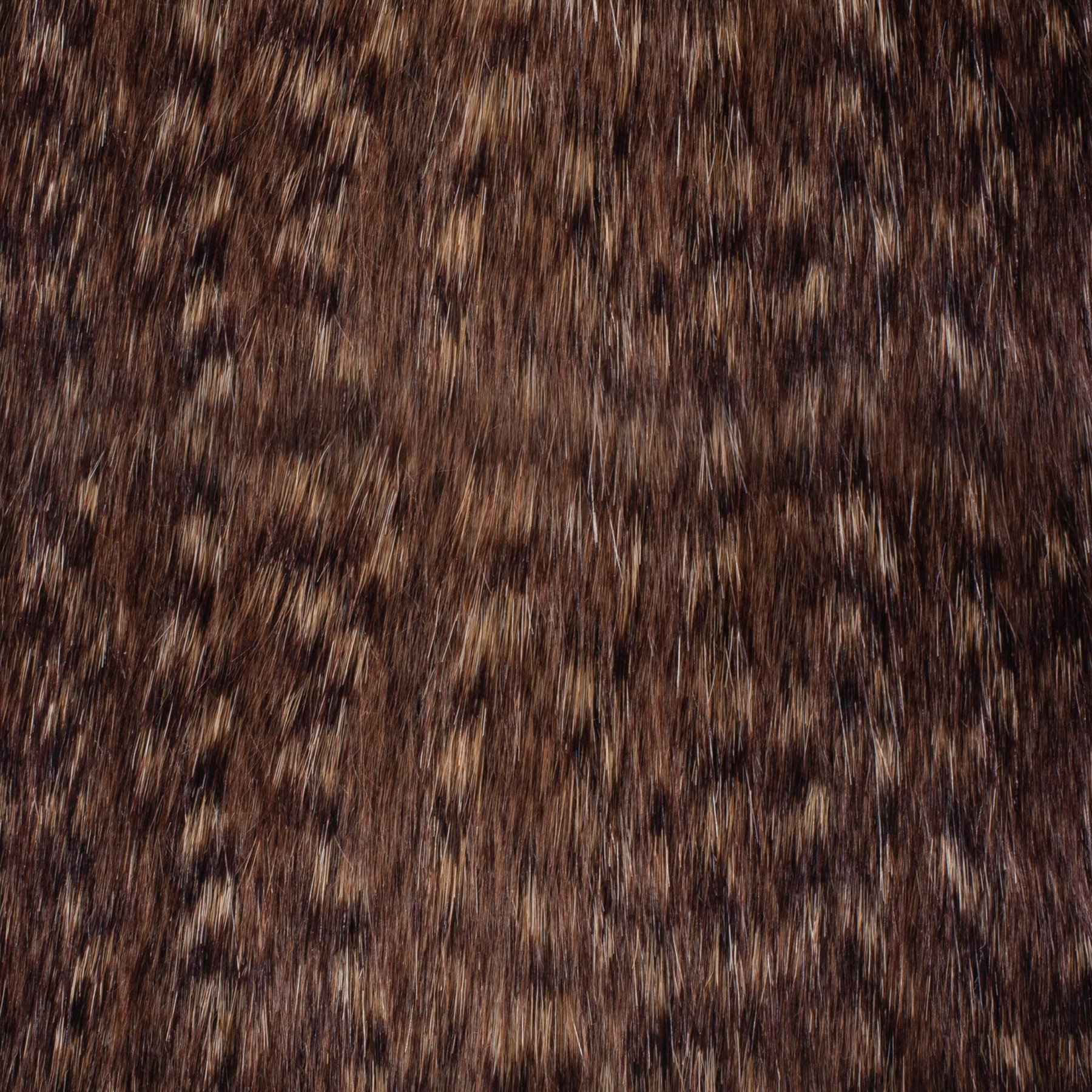 Brown Bear Swatch