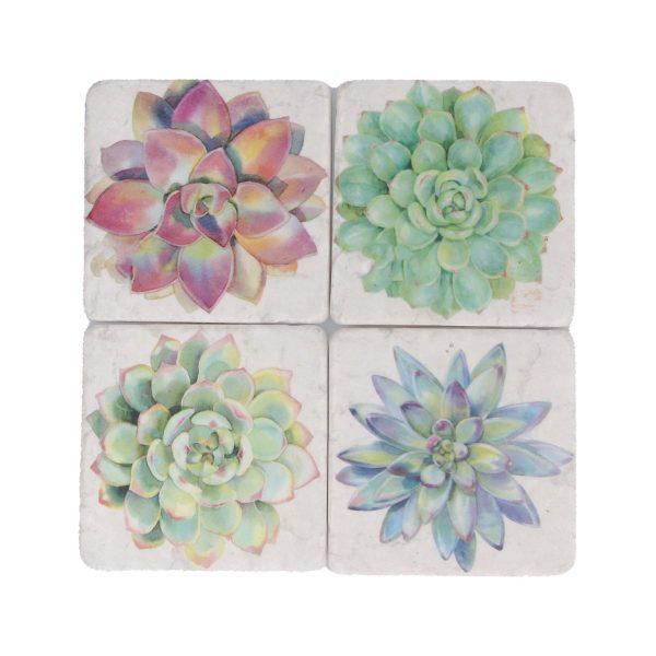 Succulents Set of 4 Coasters